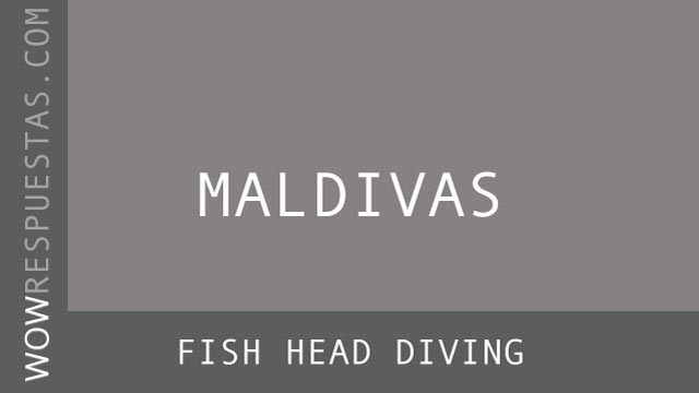 WOW Fish Head Diving